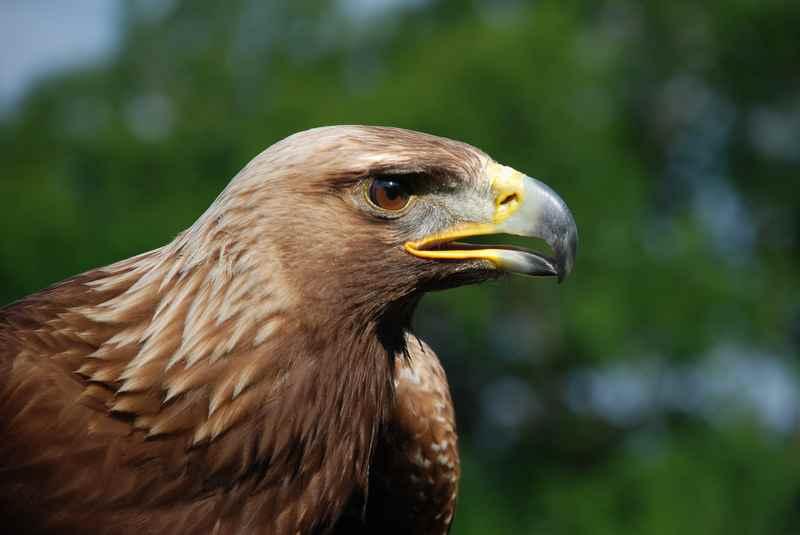 Diese Natur lieben wir: Im Karwendel lebt die größte Population an Adlern in den Alpen.