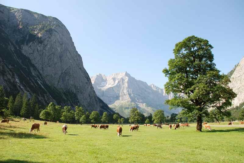 Ausflugsziel ab Fall: Der Große Ahornboden im Karwendel