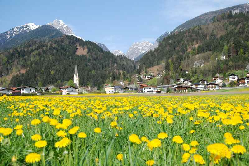 Aprilurlaub im Karwendel - mit den blühenden Löwenzahnwiesen in Stans