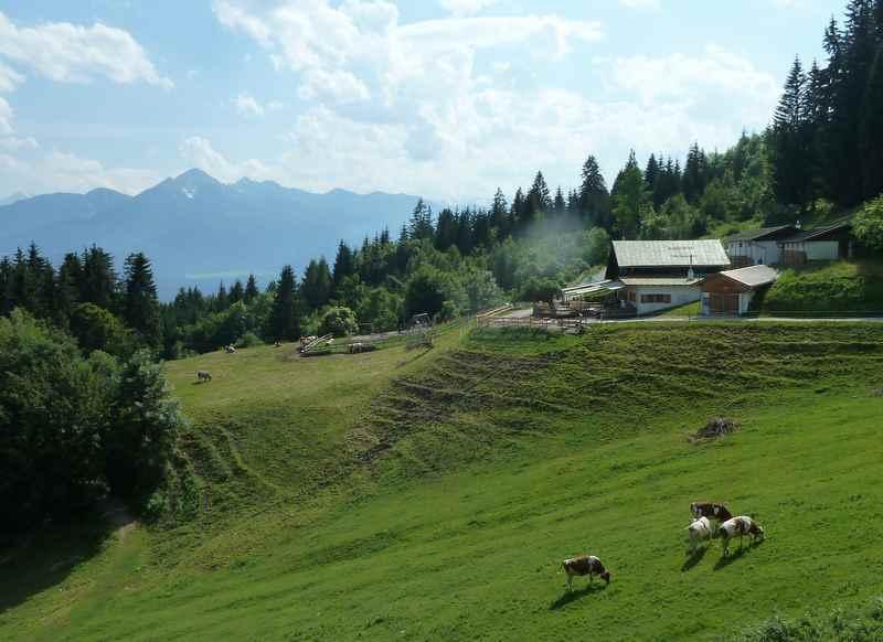 Die Arzler Alm in Innsbruck, hier grasen im Sommer die Kühe im Karwendel