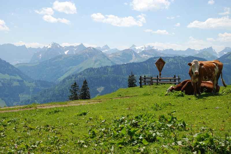 Die Aussicht bei der Rotwandalm ins Karwendel, die Falkengruppe sticht besonders hervor