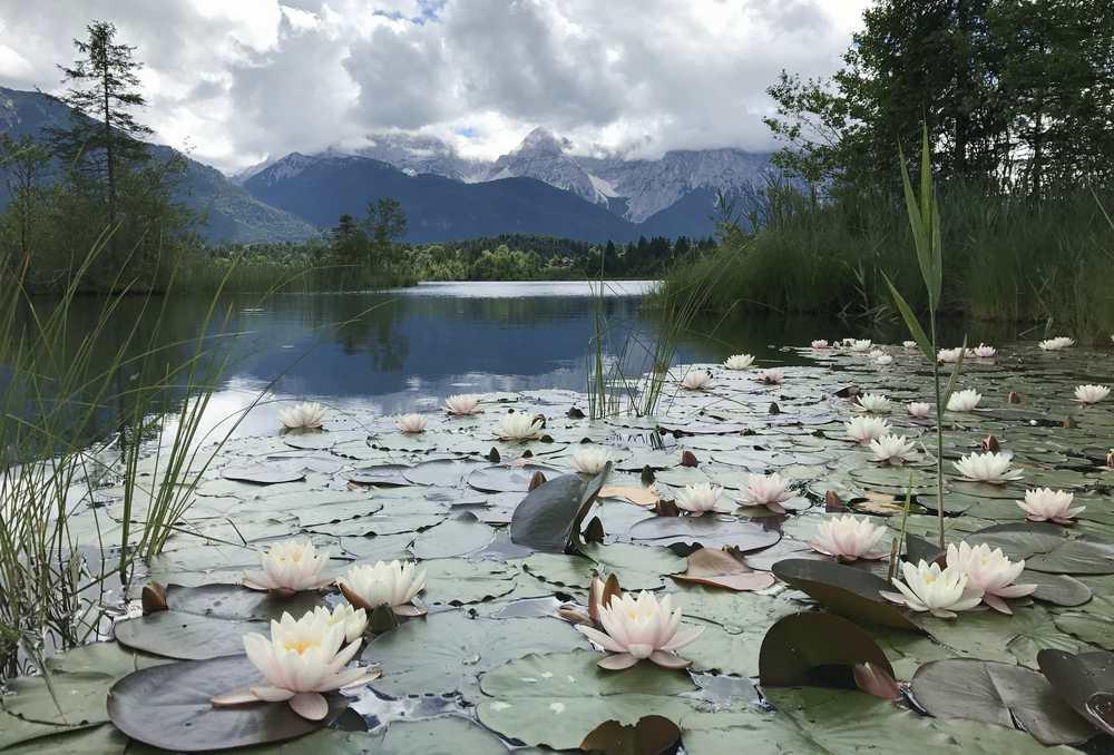 Bei einem Frühlingsurlaub in Krün könnt ihr am Barmsee die Seerosen bewundern, nebendran ist im Sommer die Liegewiese zum Baden