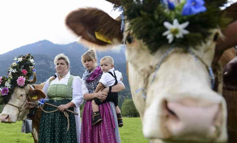 Eine schöne Tradition in Bayern: Almabtrieb Mittenwald im Isartal, Foto: Wolfgang Ehn, Alpenwelt Karwendel