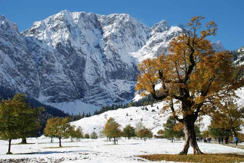 Die Blattfärbung am Ahornboden beim ersten Schnee im Herbst