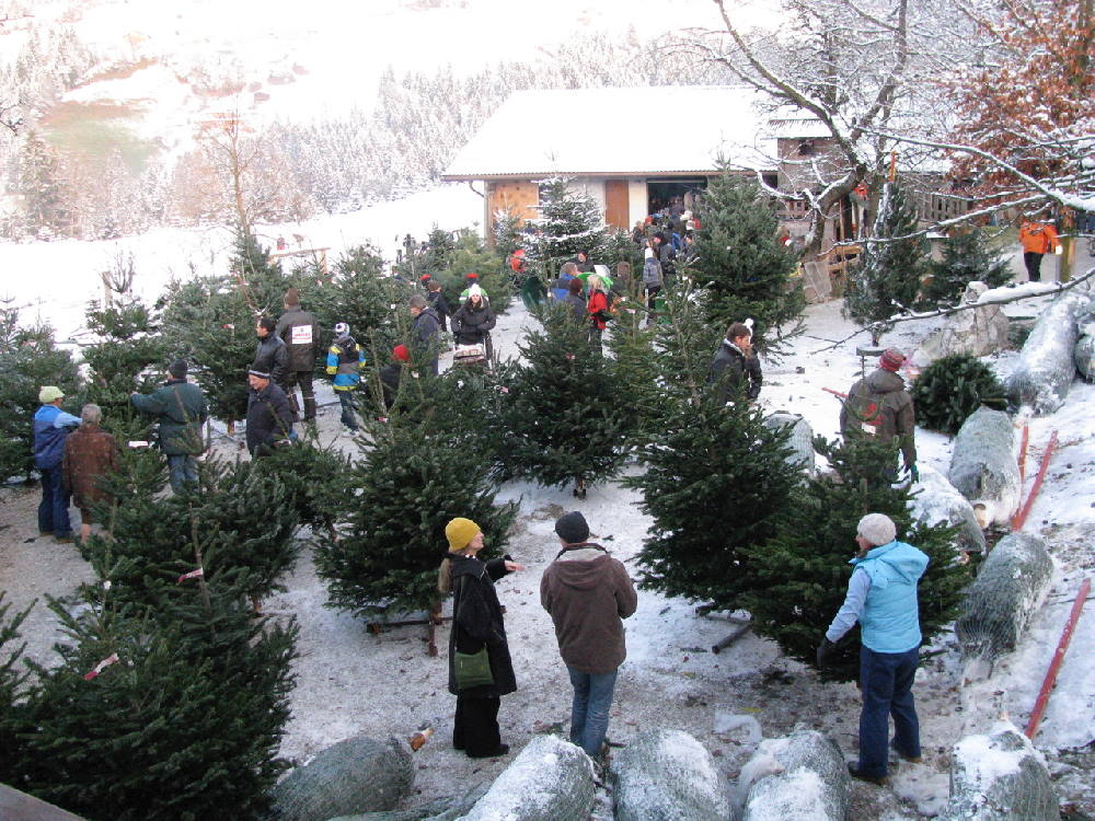Hoftag am Tunelhof - wo die Tiroler Weihnachtsbäume wachsen. Ab Hof Verkauf.