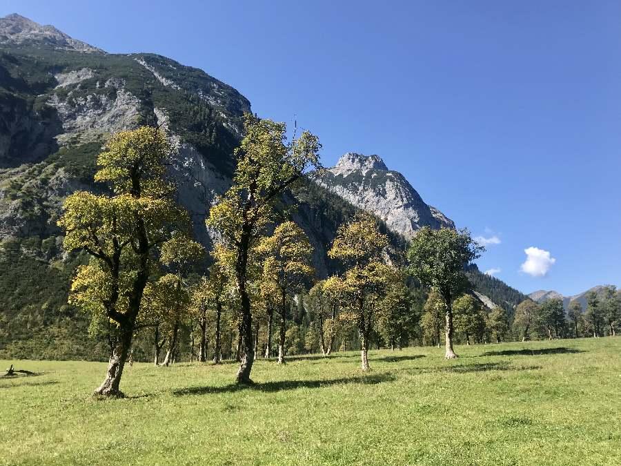 Im Herbst färben sich nach und nach die Ahornbäume am Ahornboden in der Eng