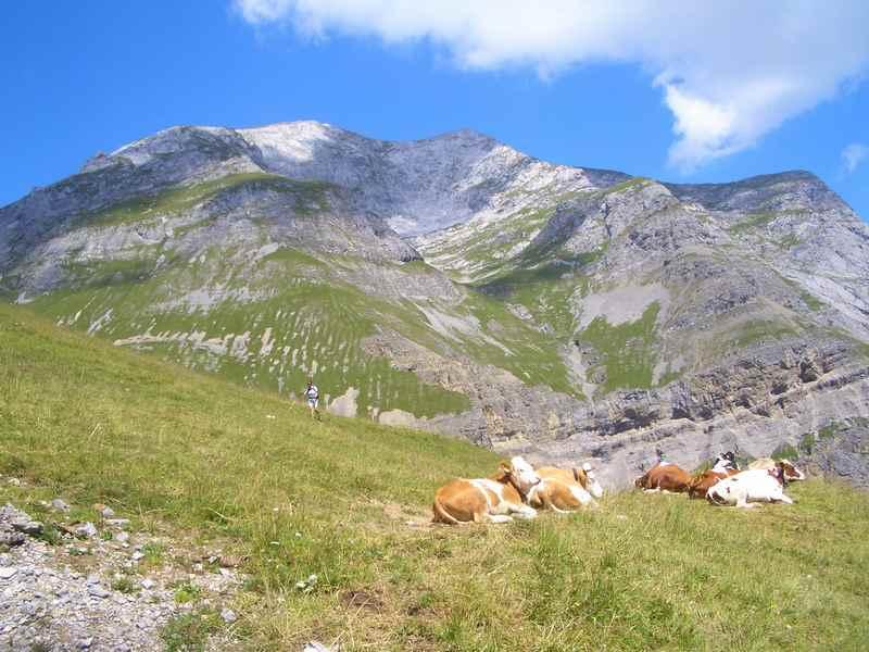 Wandern bei der Engalm mit Kindern ins Karwendelgebirge