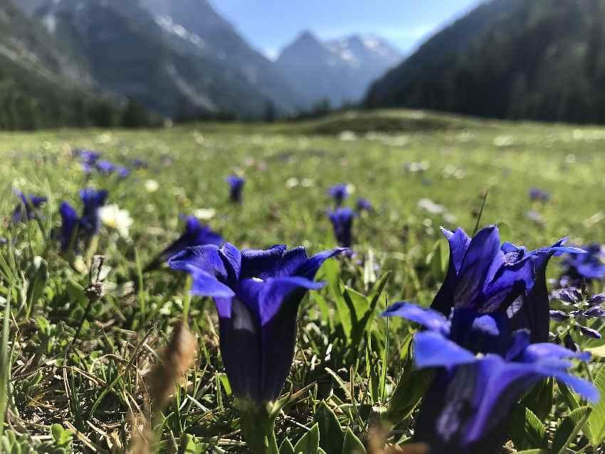 Die Blumenwiese mit den vielen Enzian gefällt mir auf meiner Karwendelhaus MTB Tour besonders