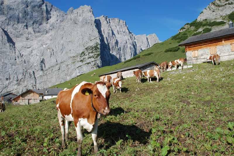 Familienurlaub Karwendel mit Kindern: Ein echter Natururlaub in den Bergen