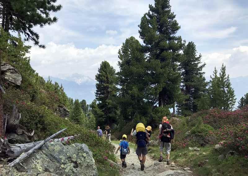 Die Familienwanderung am Zirbenweg bei Innsbruck ist vielbegangen