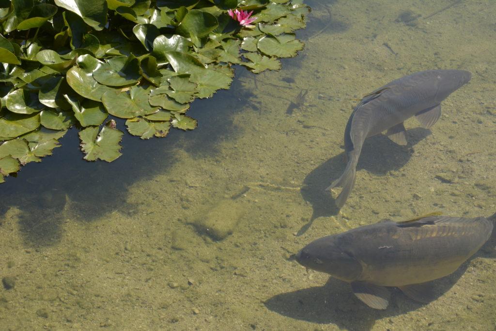 Richtig dicke Fische!