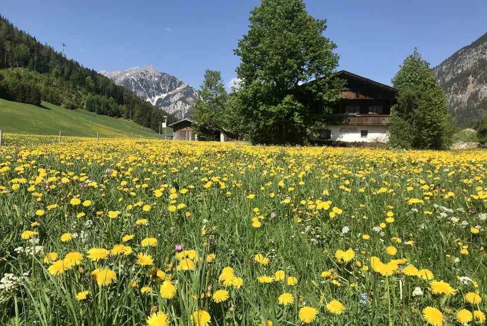 Hinter dem Fürstenhaus blühen die Frühlingswiesen grün und leuchtend gelb.