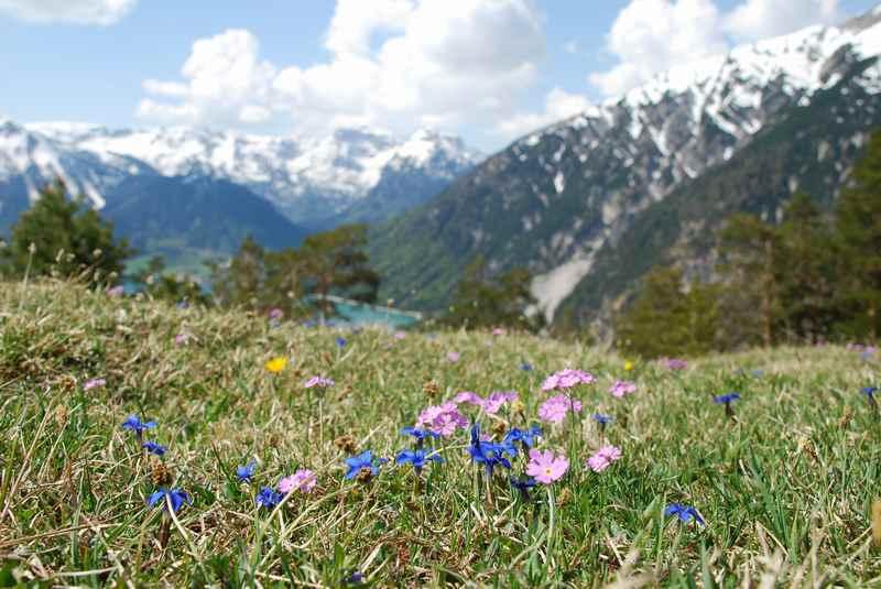 Im Frühling wandern mit Kindern zu den ersten Blumen am Berg