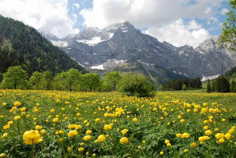 Frühlingswanderungen Karwendel - am Ahornboden die Trollblumen bewundern