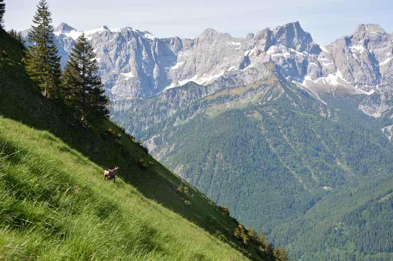 Weiter oben wird die gesamte Karwendelkette sichtbar, die Gämsen laufen schnell davon