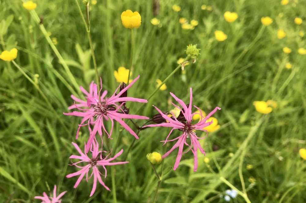 So bunt blühen die Wiesen rund um den Geroldsee