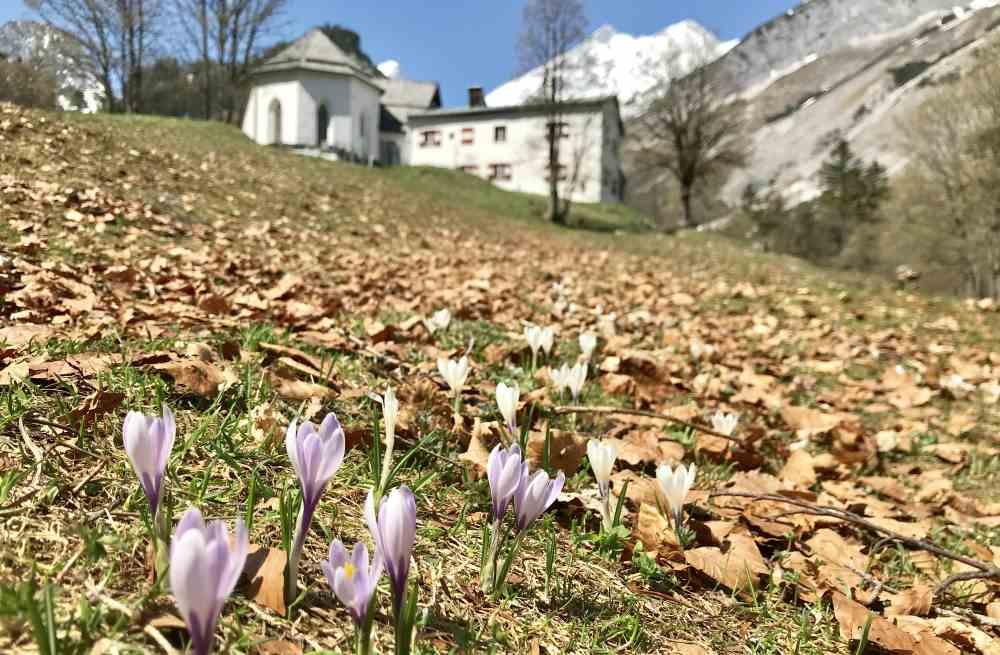 Frühling in St. Magdalena mit den weißen Bergen des Karwendelgebirge