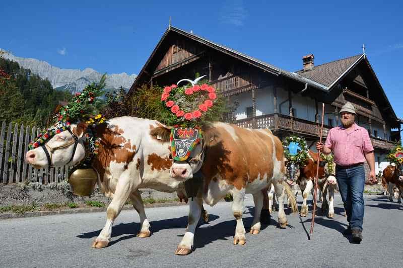 Ein echt traditioneller Herbst in den Alpen: Der Almabtrieb durch die kleinen malerischen Orte im Karwendel