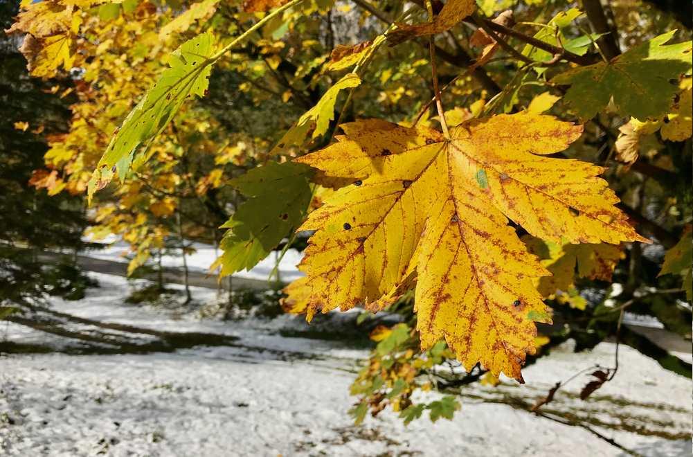 Herbstwanderung Achensee mit dem bunten Laub