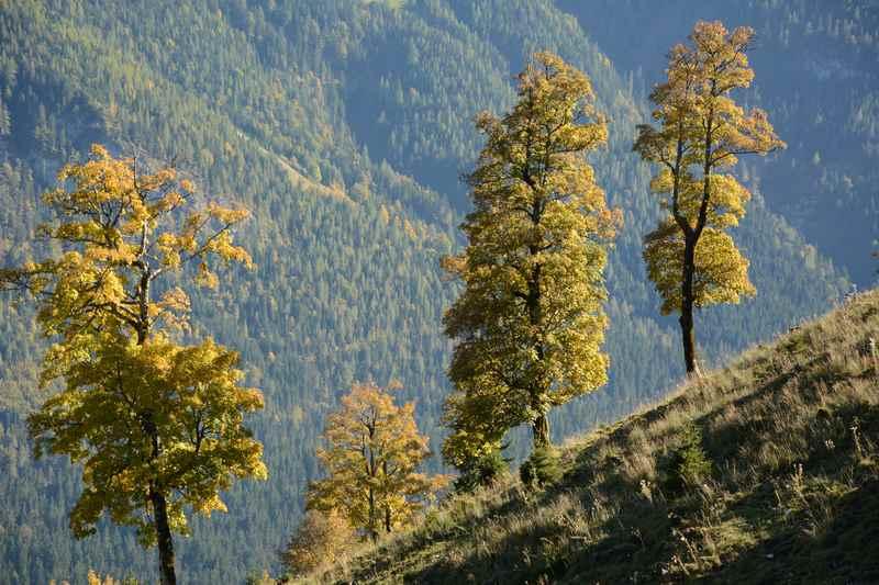 Herbsturlaub mit Kuchenbuffet: Im Wanderhotel und Biohotel Leutascherhof