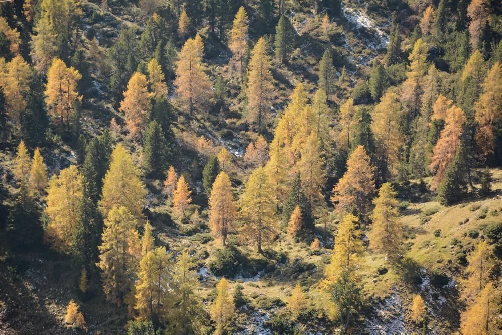 """Diese Färbungen liebe ich im besonders beim Herbstwandern - wenn die """"Lärchen brennen"""""""