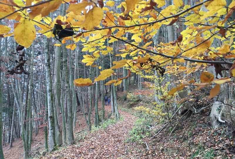 Sonnige Herbstwanderung mit dem bunten Laub im Karwendel