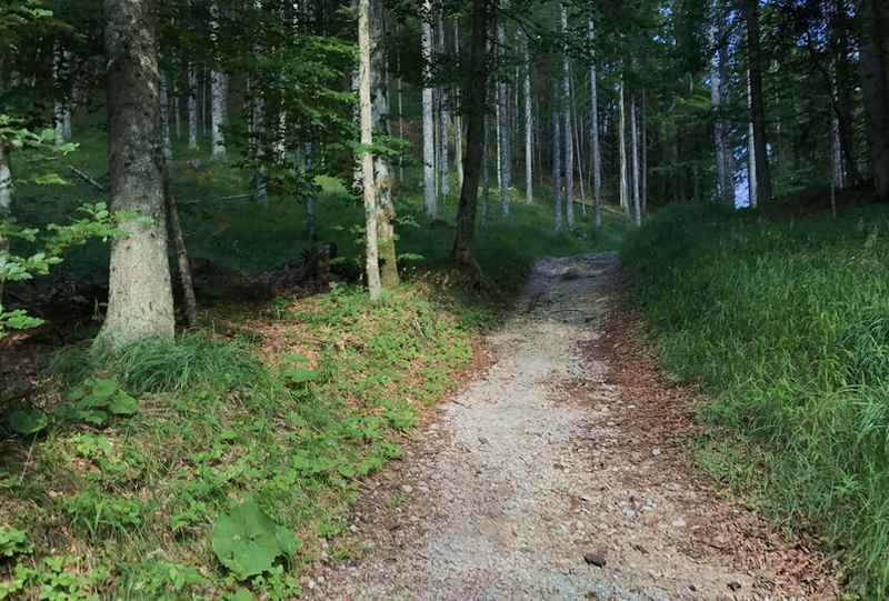 Das ist der Wandersteig durch den Wald in Richtung Gipfel