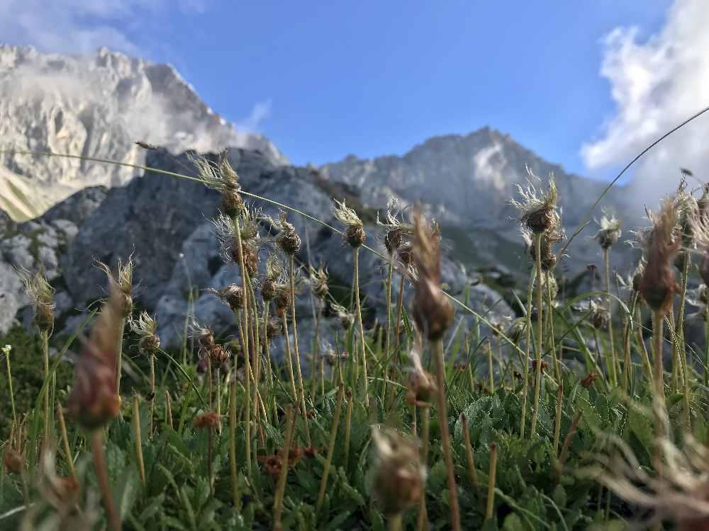 Der Almboden liegt noch im Schatten, die Bergspitzen vom Wettersteingebirge werden von der Sonne angestrahlt
