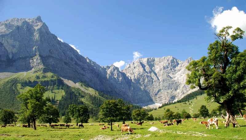 Kulisse für den Bergsommer in Tirol - das Karwendel im Juli Urlaub mit den Kühen auf der Alm