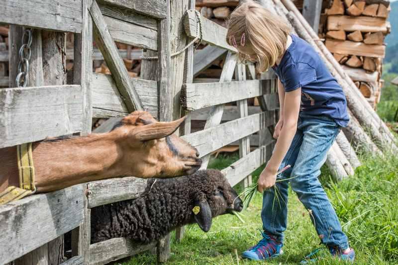 Im Karwendel ein Bauernhof Urlaub, wo die Kinder auch mal Tiere füttern dürfen