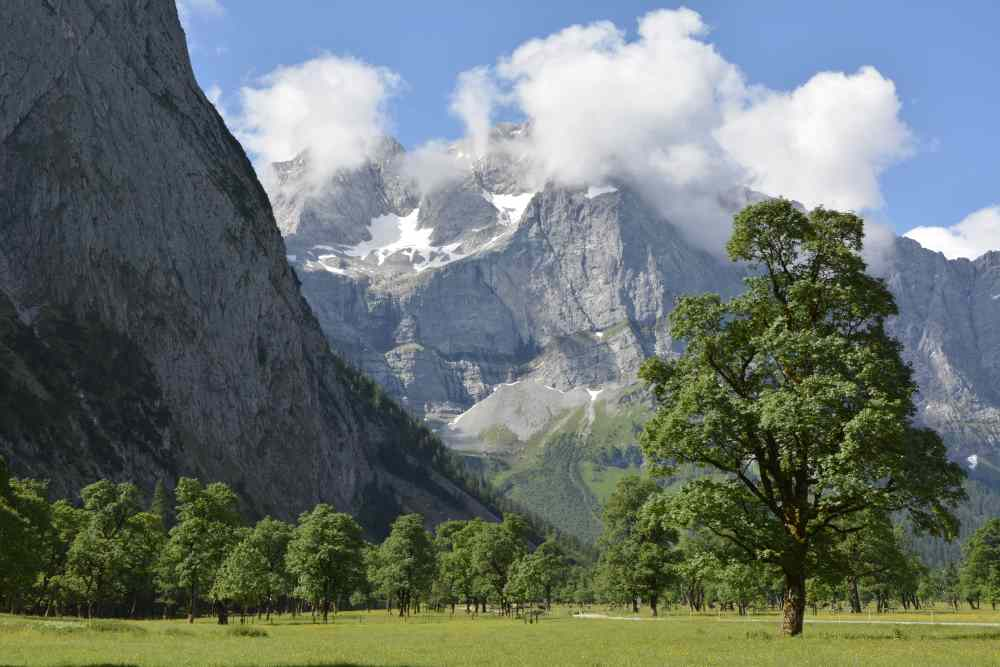 Die Eng im Sommer: Riesige Ahornbäume vor den Karwendel - Wänden
