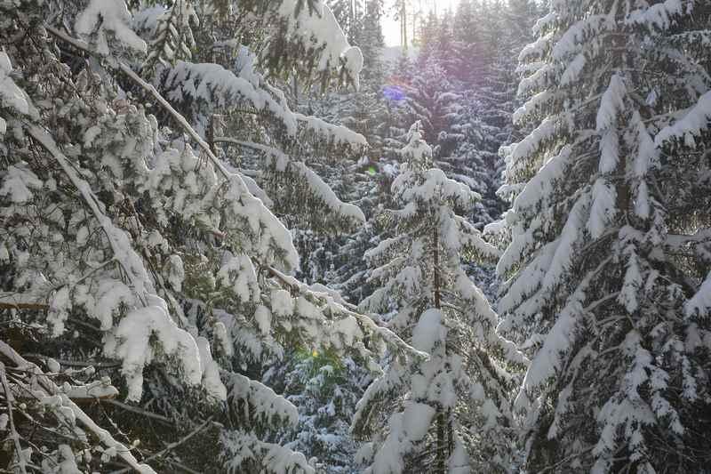 Und bei Neuschnee ist die Winterstimmung beim Winterwandern durch den Wald wunderbar