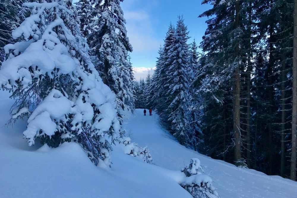 Am Kellerjoch rodeln und durch den verschneiten Wald winterwandern