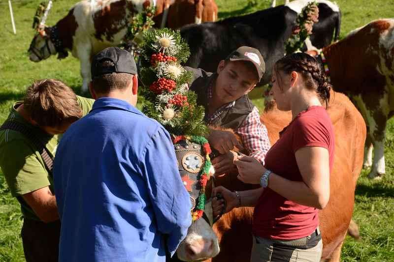 Das Aufbüscheln der Kühe für den Almabtrieb gehört zur Tradition im Karwendel