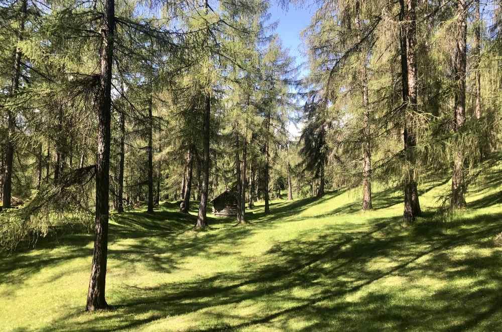 Danach fahre ich durch diesen schönen Lärchenwald - die Sonne und das frische Grün, herrlich!