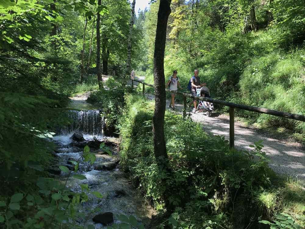 So romantisch durch den Wald beginnt die Mittenwald Wanderung im Laintal