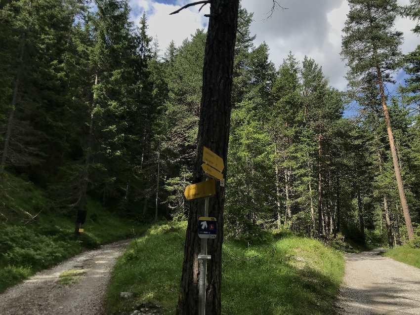 2 Wanderweg: Rechts die Forststraße, links der Bachweg, der zu einem Wandersteig wird