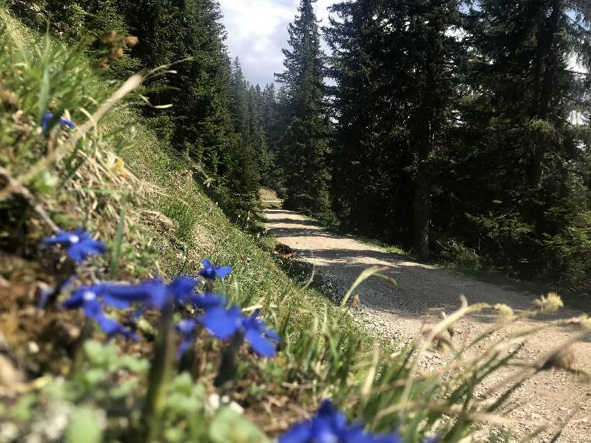 Das ist die flache Forststraße zur Wettersteinhütte
