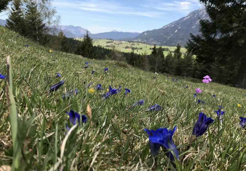 Das gefällt mir im Frühling: Über die Blumenwiesen wandern am Kranzberg in Mittenwald