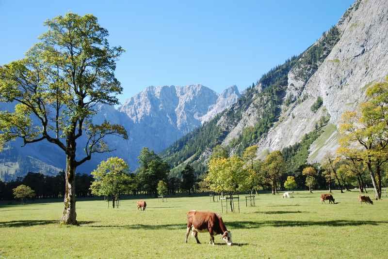 Das Herz des Naturpark Karwendel: Der große Ahornboden