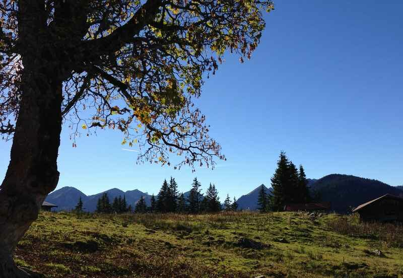Der Ahornbaum bei der Nonnnalm - ein Naturdenkmal im Karwendelgebirge