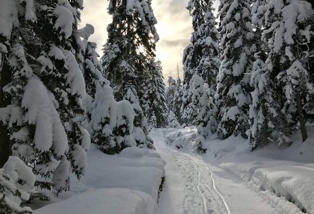 Rauthhüte winterwandern - im frischen Schnee ein Wintertraum