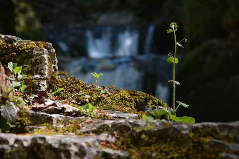 Moose und Pflanzen können am Wasser nache des Rottachfalls gut wachsen