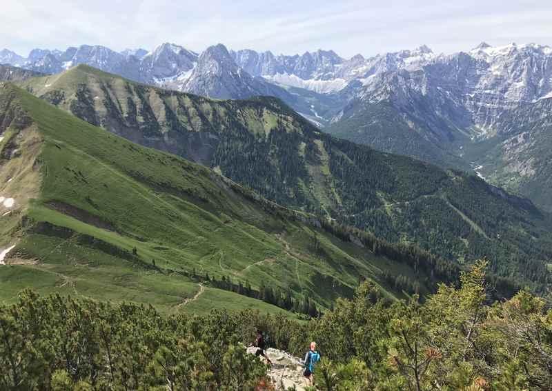 Durch die Latschen auf den Scharfreiter oder Schafreuter im Karwendel wandern
