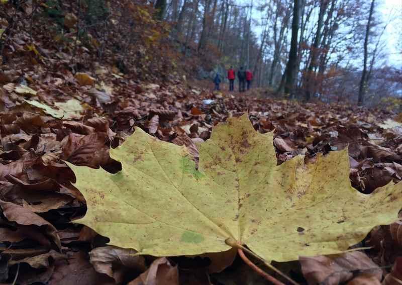 Durch das bunte Laub im Herbst wandern