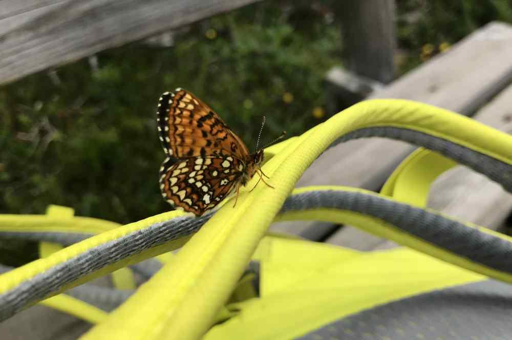Pause mit Schmetterling - auf einer der vielen Bänke am Isarursprung