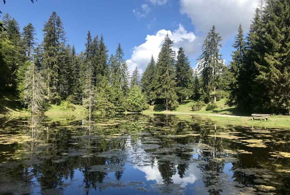 Das ist der kleine See am Gschwandtkopf Seefeld - willst du auch auf dieser Bank sitzen?