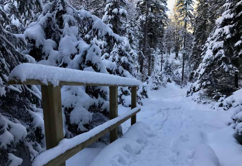 Winterwanderung Seefeld ab Wildmoos durch den Wald zum Brunschkopf