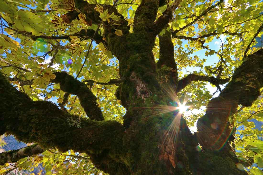 Franz Zeiler erlebt den September Urlaub im Karwendel mit dieser schönen Blattfärbung