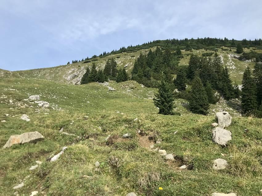 Vor mir die Almwiese mit dem Anstieg zum Simetsberg Gipfel